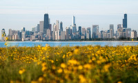 Chicago Skyline with flowers (1)